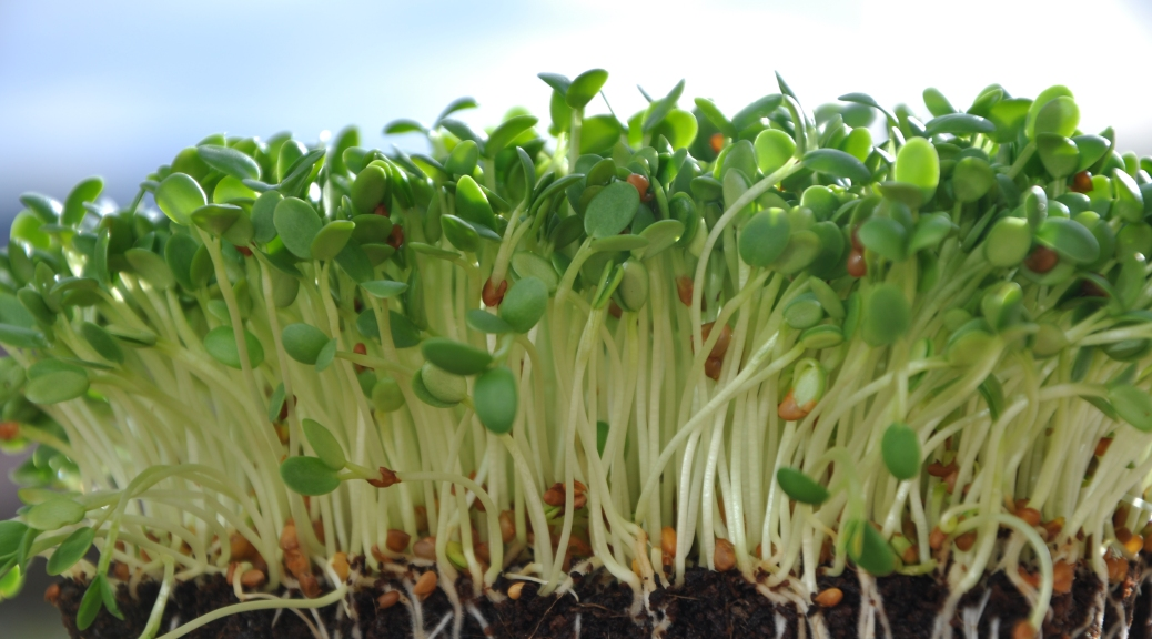 semillas - por qué